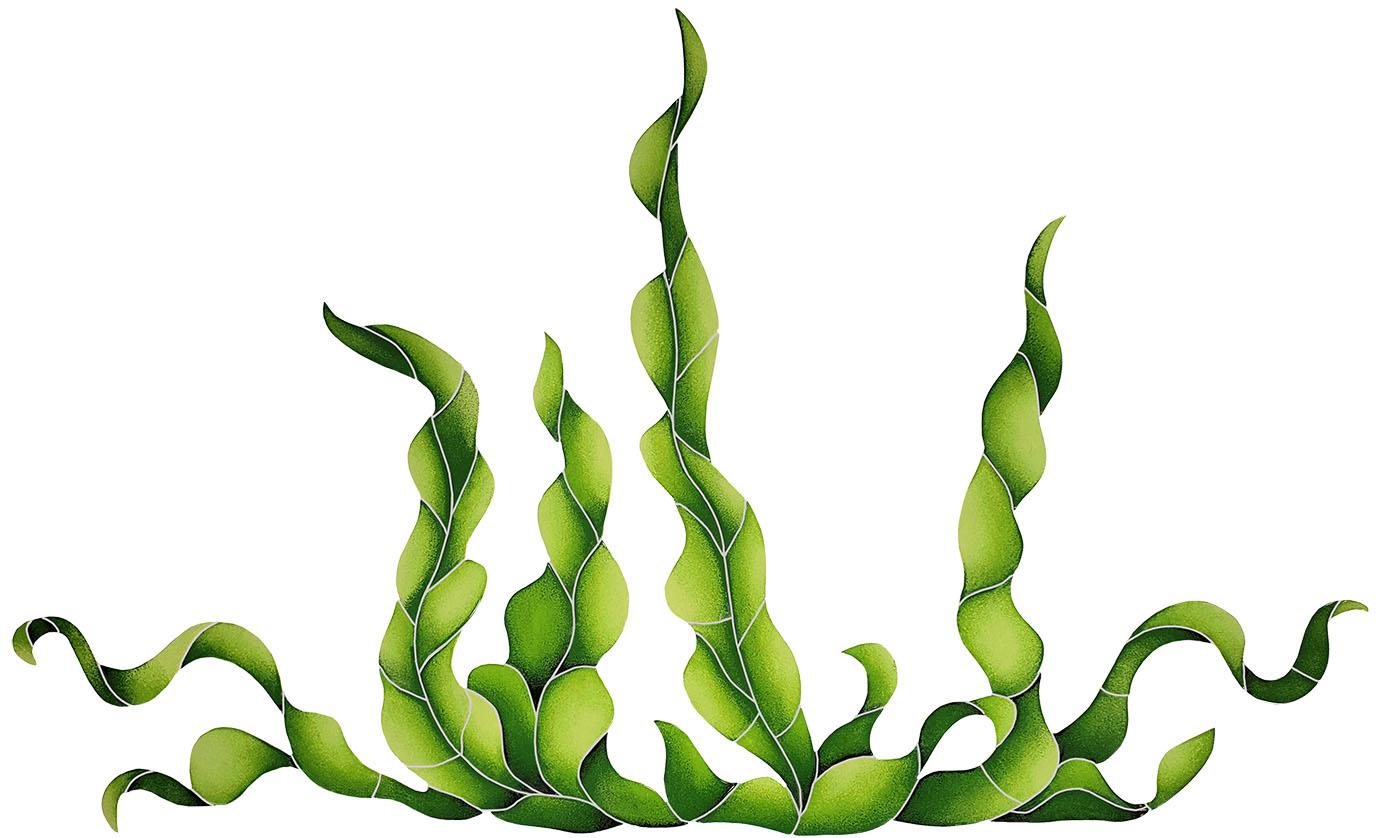 Seaweed & Grass