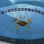 Blue Crab Pool Mosaics