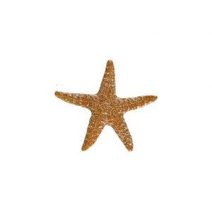 Mini Starfish Pool Mosaics