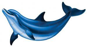 Bottlenose Dolphin B Pool Mosaics