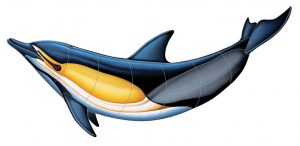 Common Dolphin B Pool Mosaics