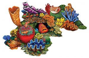Coral Reef C Pool Mosaics