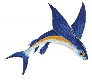 Flying Fish A Pool Mosaics