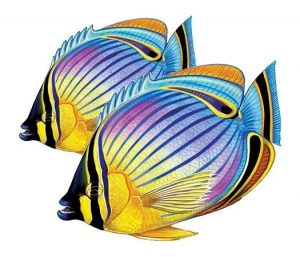 Redfin Butterflyfish (Double) Pool Mosaics