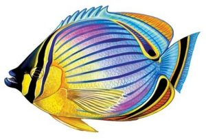Redfin Butterflyfish Pool Mosaics