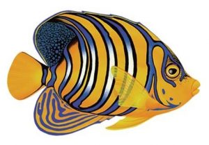 Regal Angelfish Pool Mosaics