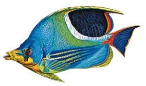 Saddled Butterflyfish Pool Mosaics