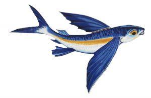 Flying Fish B Pool Mosaics