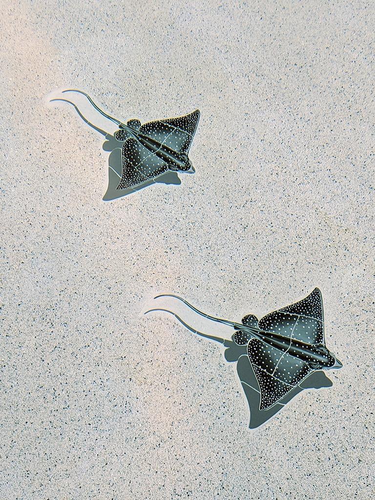 Eagle Ray Pool Mosaics